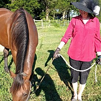 Standardbred Mix for adoption in Salisbury, Maryland - Rising Ty
