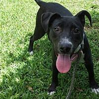 Adopt A Pet :: Jasmine - Olympia, WA