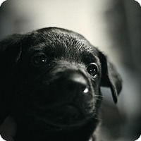Adopt A Pet :: Micah - Fredericksburg, VA