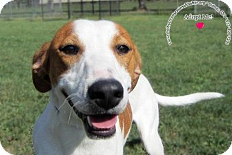Hound (Unknown Type) Mix Dog for adoption in Sidney, Ohio - Jack