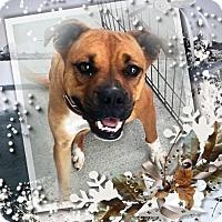 Adopt A Pet :: Chole - Crowley, LA