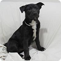 Adopt A Pet :: Melanie - Randolph, NJ