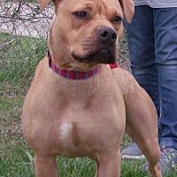Adopt A Pet :: Trixie - Somerset, KY