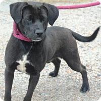 Adopt A Pet :: BUTCH C-17-141 - Chester, SC