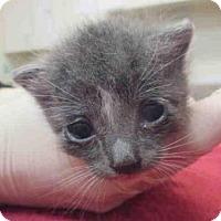 Adopt A Pet :: O-5 - Santa Maria, CA