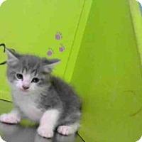 Adopt A Pet :: HADEN - Houston, TX
