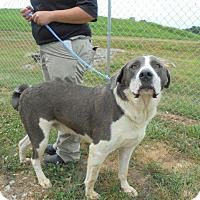 Adopt A Pet :: Ruggs - Springfield, TN