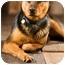 Photo 2 - Rottweiler Mix Dog for adoption in Portland, Oregon - Max