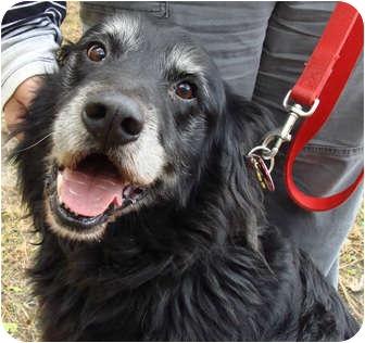 Retriever (Unknown Type) Mix Dog for adoption in Virginia Beach, Virginia - Rex