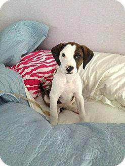 Terrier (Unknown Type, Medium) Mix Puppy for adoption in Atlanta, Georgia - Grace