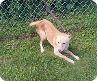 Labrador Retriever Mix Dog for adoption in Ironton, Ohio - 41198