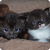 Adopt A Pet :: Suzie - Xenia, OH