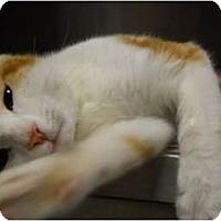 Adopt A Pet :: Mr. Buttons - Mobile, AL
