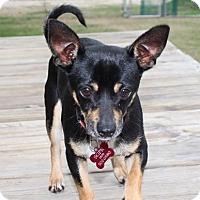 Adopt A Pet :: Chester - Vidor, TX