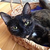 Adopt A Pet :: Larissa - St. Louis, MO