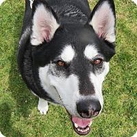 Adopt A Pet :: Oreo - Santa Ana, CA