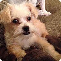 Adopt A Pet :: SUNSHINE - Higley, AZ