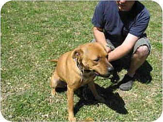 Rhodesian Ridgeback Mix Dog for adoption in Lavon, Texas - Rita