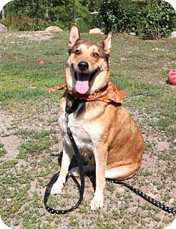 Shepherd (Unknown Type) Mix Dog for adoption in Gloucester, Massachusetts - Sweets