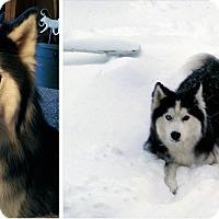 Adopt A Pet :: Finian - Boyertown, PA