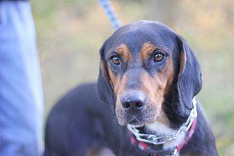 Hound (Unknown Type) Mix Dog for adoption in Palmyra, Nebraska - Elvis