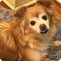 Adopt A Pet :: CINDY - SO CALIF, CA