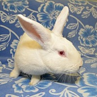 Florida White Mix for adoption in Chesterfield, Missouri - Mack