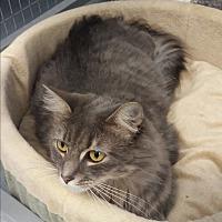 Adopt A Pet :: Kirby - Ruckersville, VA