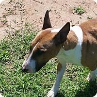 Adopt A Pet :: Honey - Glenwood, AR