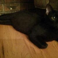Adopt A Pet :: Keegan - Oviedo, FL