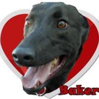 Adopt A Pet :: Baker 1636 - Tucson, AZ