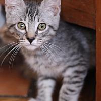 Adopt A Pet :: Ranger - Pasadena, CA