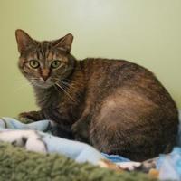 Adopt A Pet :: Lorelei - Winchester, TN