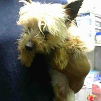 Adopt A Pet :: FAYRE - Atlanta, GA