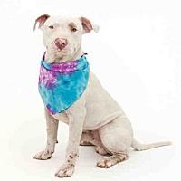 Adopt A Pet :: TONKA - Orlando, FL