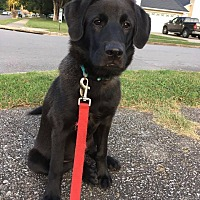 Adopt A Pet :: Cash - Huntsville, AL