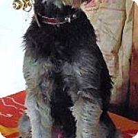 Adopt A Pet :: Kelvin - Crystal River, FL