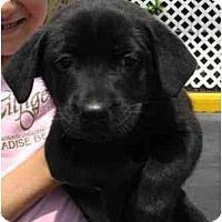 Adopt A Pet :: April - Cumming, GA