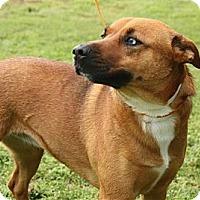 Adopt A Pet :: *Isis - PENDING - Westport, CT
