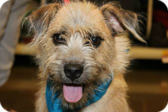 Terrier (Unknown Type, Medium) Mix Dog for adoption in Macon, Georgia - Scooby
