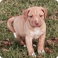 Adopt A Pet :: Chrome - Gainesville, FL