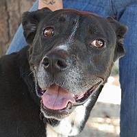 Labrador Retriever Mix Dog for adoption in Las Vegas, Nevada - Layla