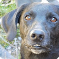 Adopt A Pet :: BUDDY - Millerstown, PA