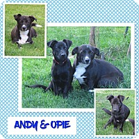Adopt A Pet :: Andy and Opie - Fort Wayne, IN
