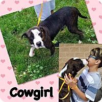 Adopt A Pet :: Cowgirl - Smithtown, NY