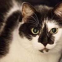 Adopt A Pet :: Hela - New York, NY