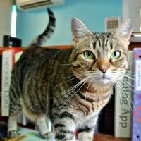 Adopt A Pet :: Princess - Camano Island, WA