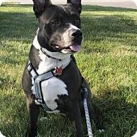 Adopt A Pet :: Bliss - Kansas City, MO