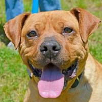 Adopt A Pet :: Lucy Lu - Annapolis, MD