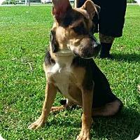 Adopt A Pet :: Halleigh - Frederick, MD
